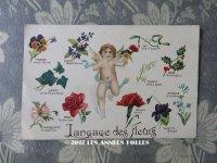 未使用 1900年代 アンティークポストカード 花言葉と天使