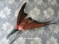 1900年代 アンティーク  帽子飾り 鳥の剥製
