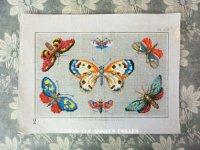 19世紀 アンティーク SAJOU クロスステッチの原画 蝶々  - MAISON SAJOU -