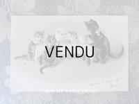 1902年 アンティークポストカード 猫の親子のティータイム エンボス加工入り