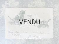 1901年 アンティークポストカード 猫の親子の本の時間 エンボス加工入り