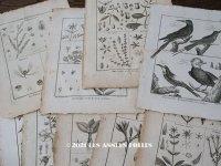 アンティーク *蚤の市セット* 18世紀 鳥 & 植物の版画 9点のセット