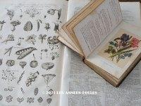 アンティーク *蚤の市セット* 1789年植物学の冊子 & 1876年花言葉の本のセット